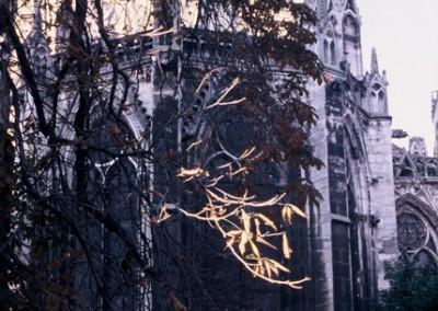 cathedrale au reveil